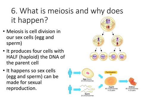 Why must sex cells be haploid jpg 720x540